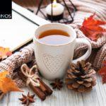 Buch und Tasse mit Herbst Dekoration, Tannenzapfen, bunten Blättern